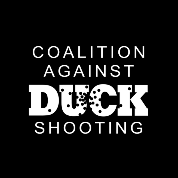 Coalition Against Duck Shooting image
